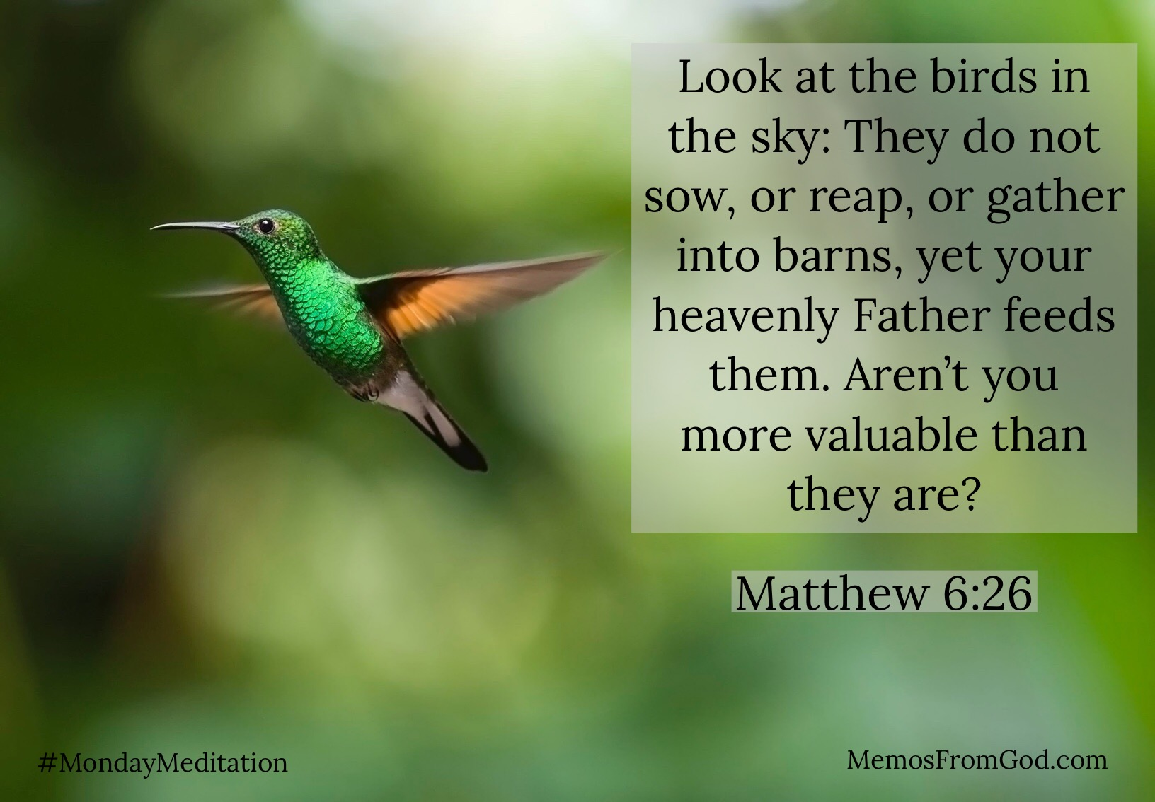 Look at the birds in the sky: They do not sow, or reap, or gather into barns, yet your heavenly Father feeds them. Aren't you more valuable than they are? Matthew 6:26