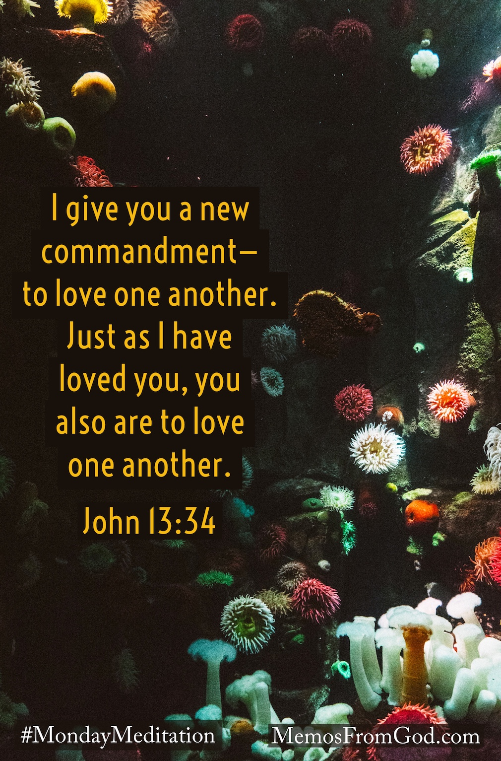 Brightly coloured aquatic plants with a dark background. Caption: I give you a new commandment—to love one another. Just as I have loved you, you also are to love one another. John 13:34
