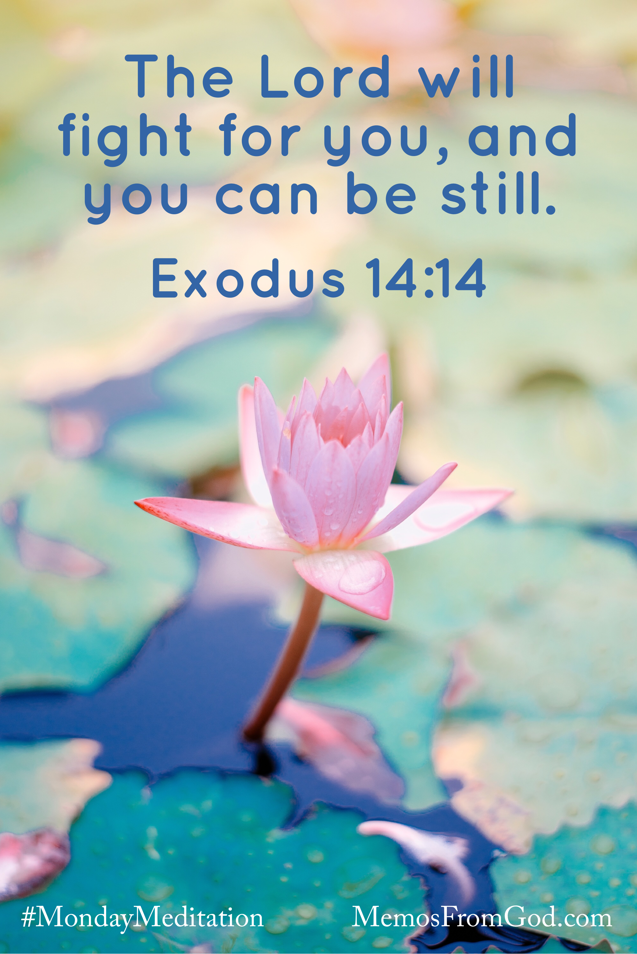 A pink water lily blooming among teal lily pads and deep blue water. Caption: The Lord will fight for you, and you can be still. Exodus 14:14