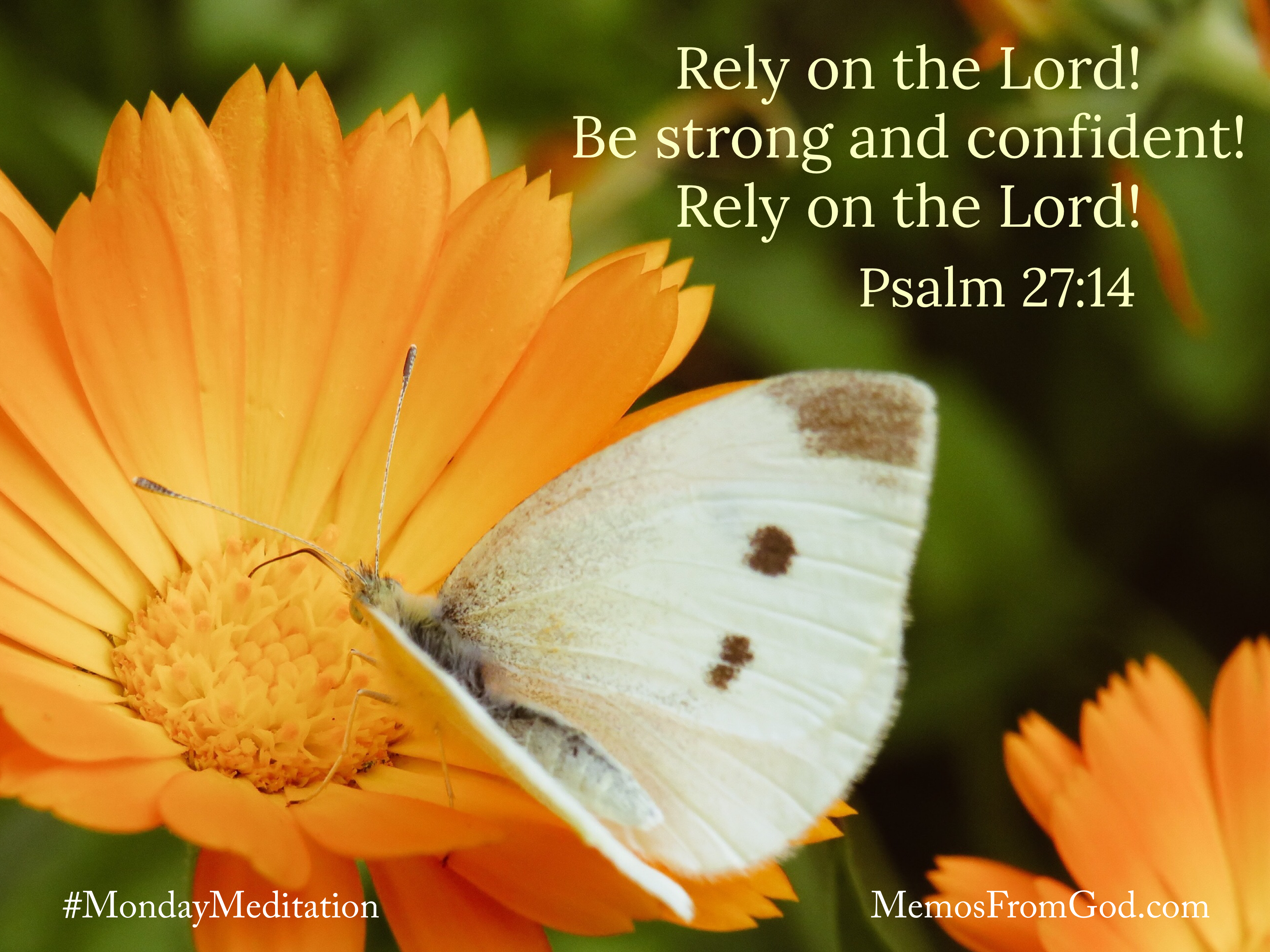 A white butterfly with brown spots on a bright orange flower. Caption: Rely on the Lord! Be strong and confident! Rely on the Lord! Psalm 27:14