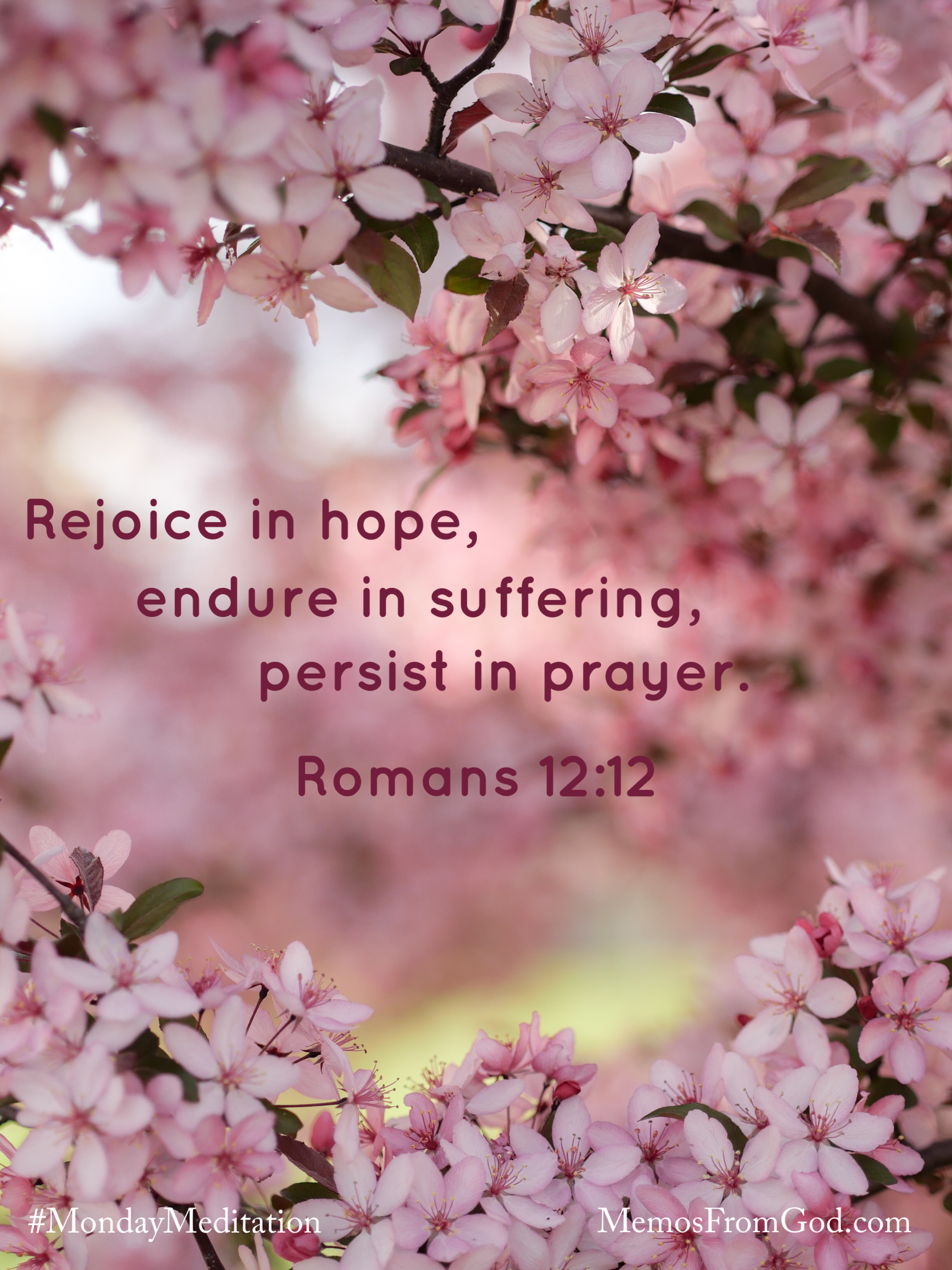 Tree branches of pink blossoms. Caption: Rejoice in hope, endure in suffering, persist in prayer. Romans 12:12
