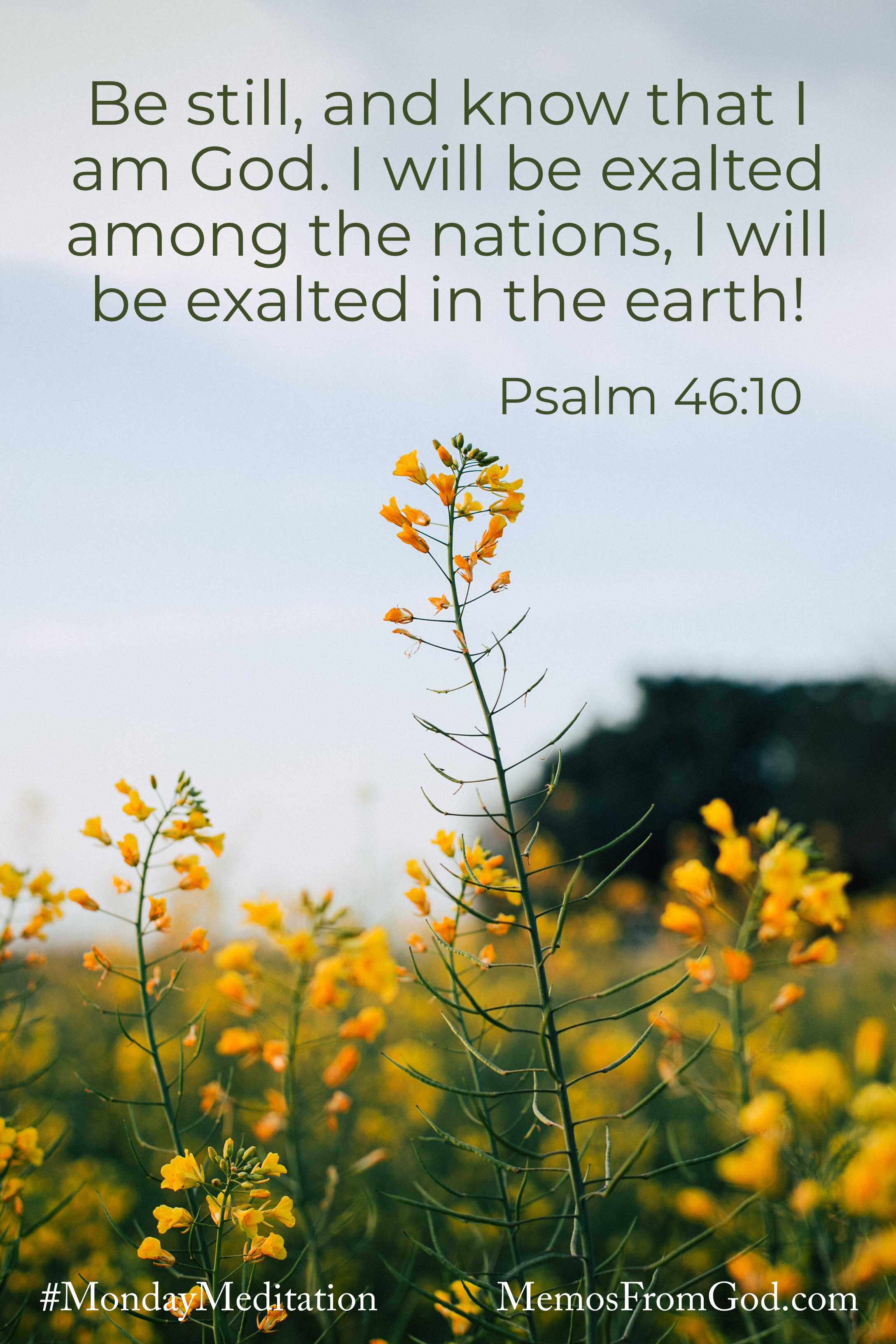 A single stalk of small yellow flowers rising above the rest, against a cloudless grey sky. Caption: Be still, and know that I am God. I will be exalted among the nations, I will be exalted in the earth! Psalm 46:10