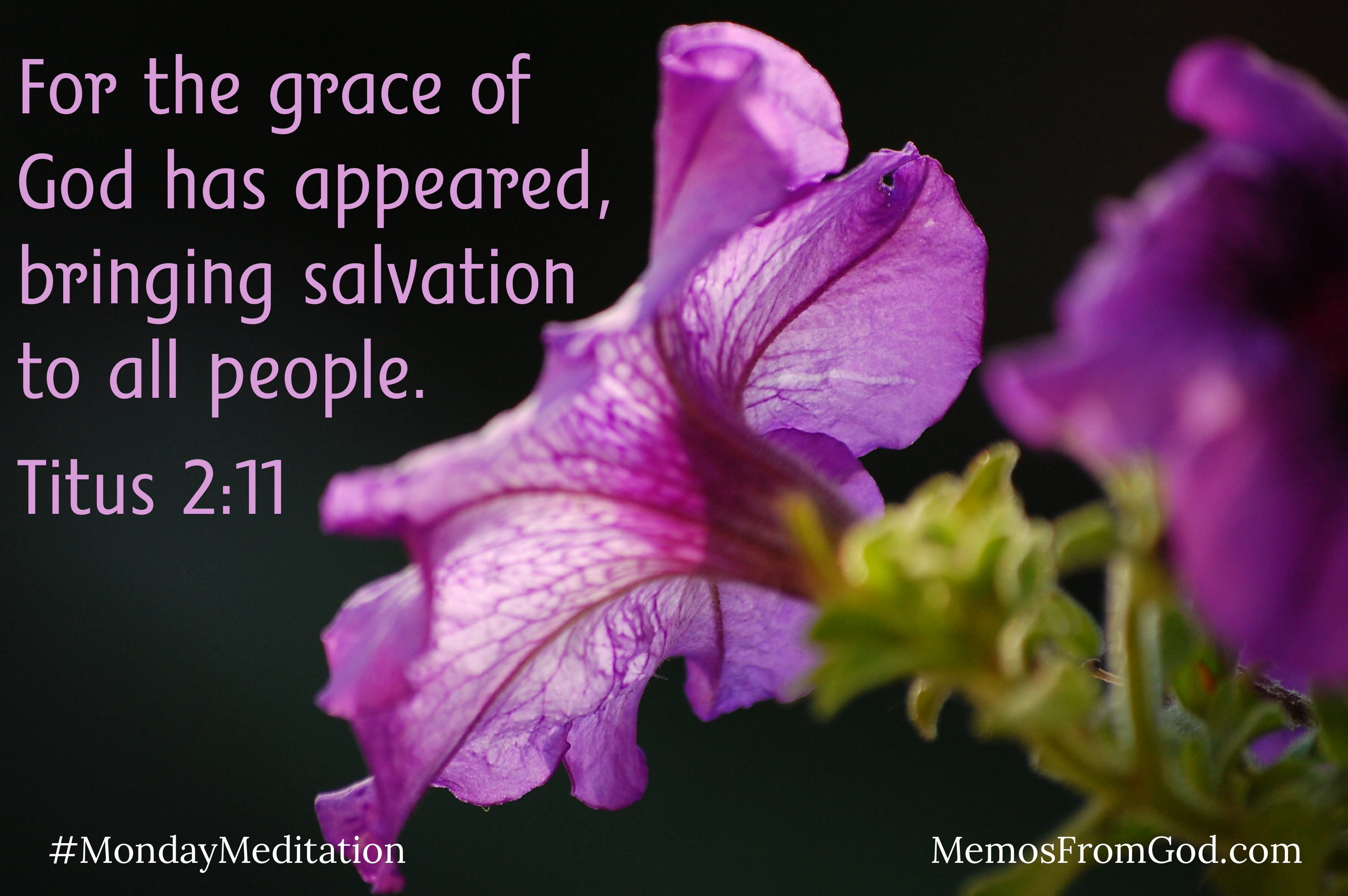 A purple petunia on a dark background. Caption: For the grace of God has appeared bringing salvation to all. Titus 2:11