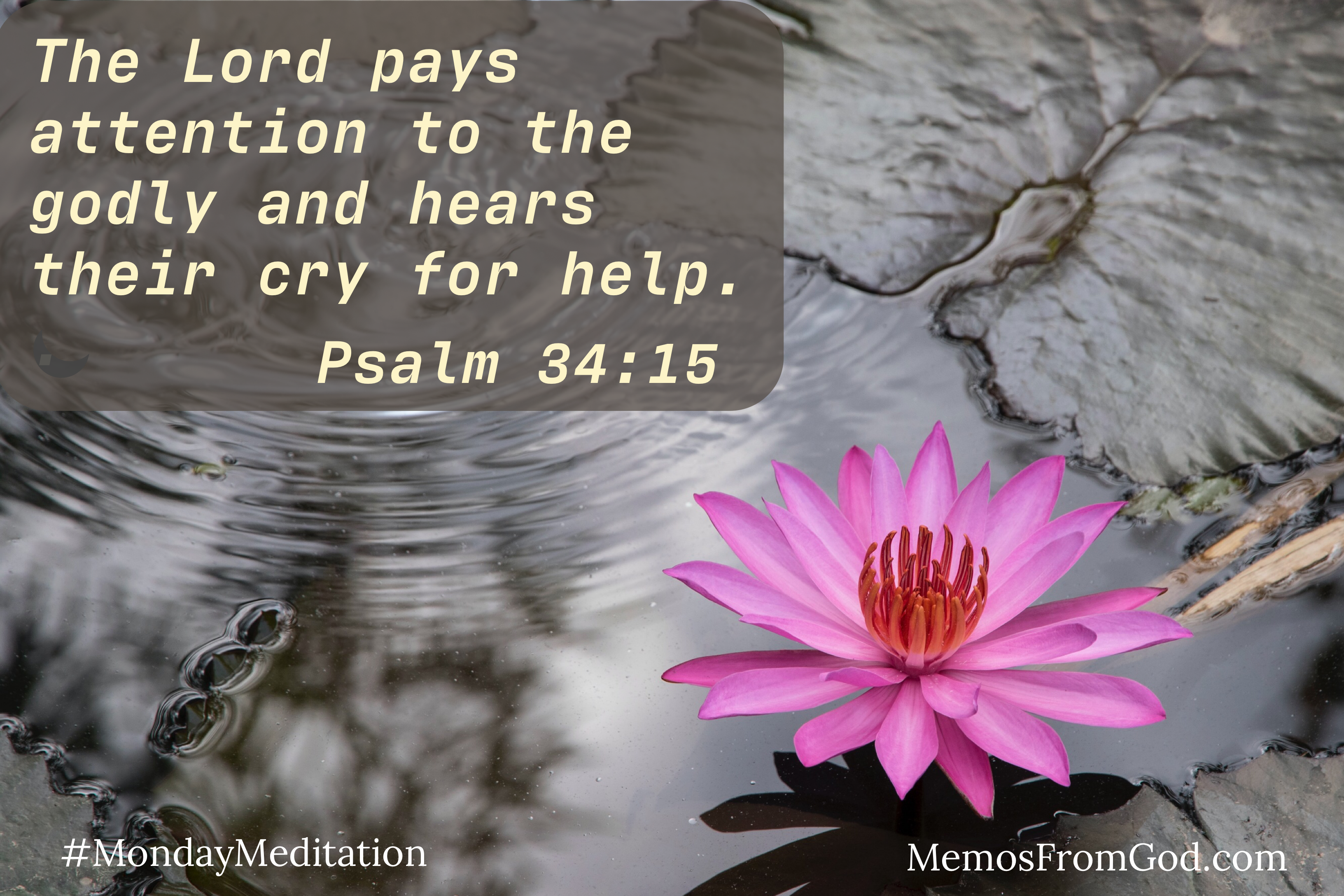 A deep pink water lily in grey, turbulent water. Caption: The Lord pays attention to the godly and hears their cry for help. Psalm 34:15