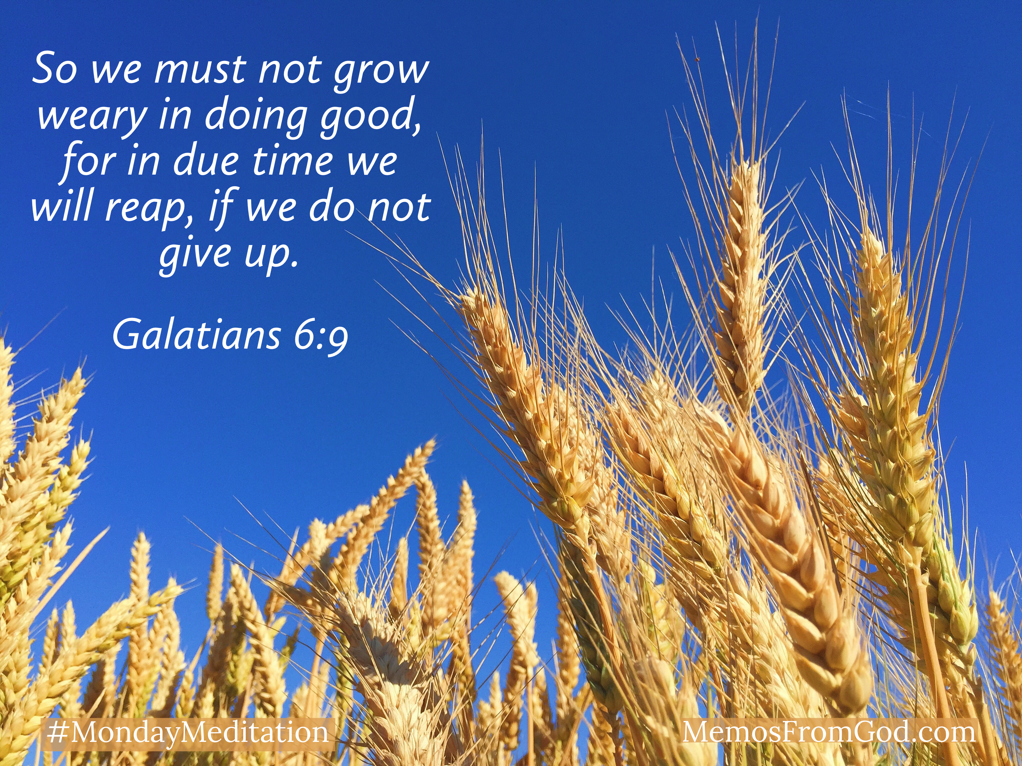 Golden wheat against a bright blue sky. Caption: So we must not grow weary in doing good, for in due time we will reap, if we do not give up. Galatians 6:9