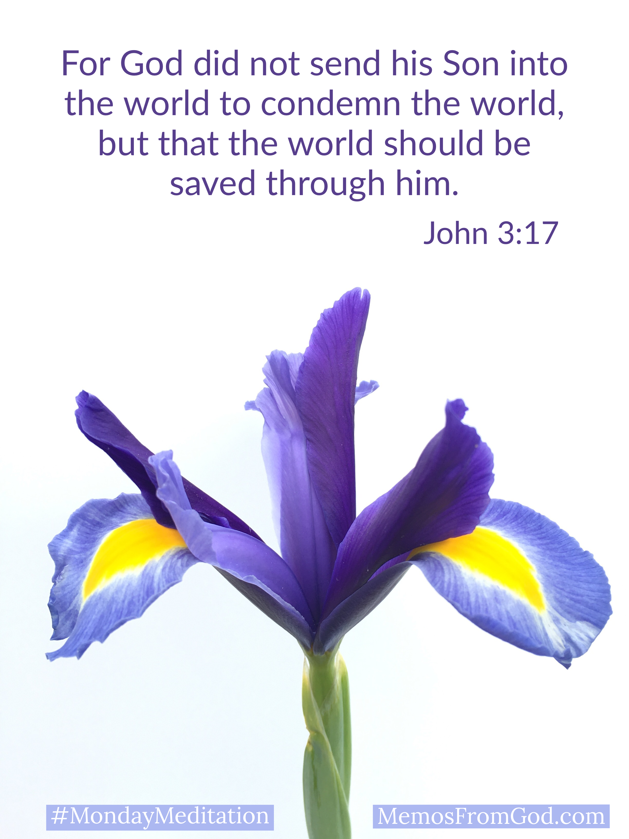 A single purple iris on a white background. Caption: For God did not send his Son into the world to condemn the world, but that the world should be saved through him. John 3:17