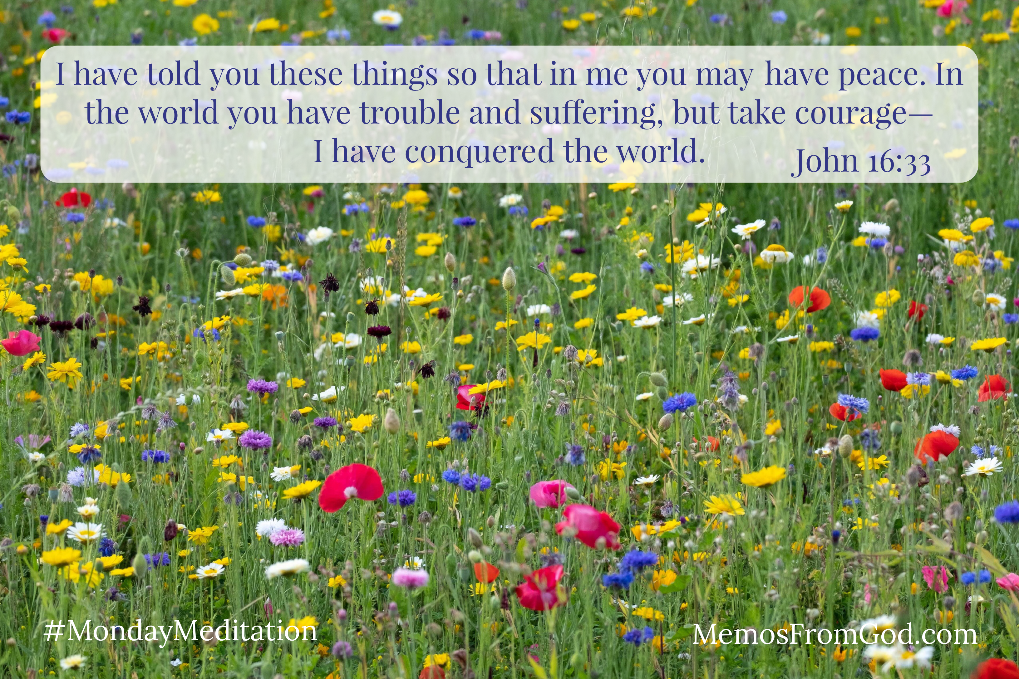 A green field filled with small, multi-coloured wildflowers. Caption: I have told you these things so that in me you may have peace. In the world you have trouble and suffering, but take courage— I have conquered the world. John 16:33