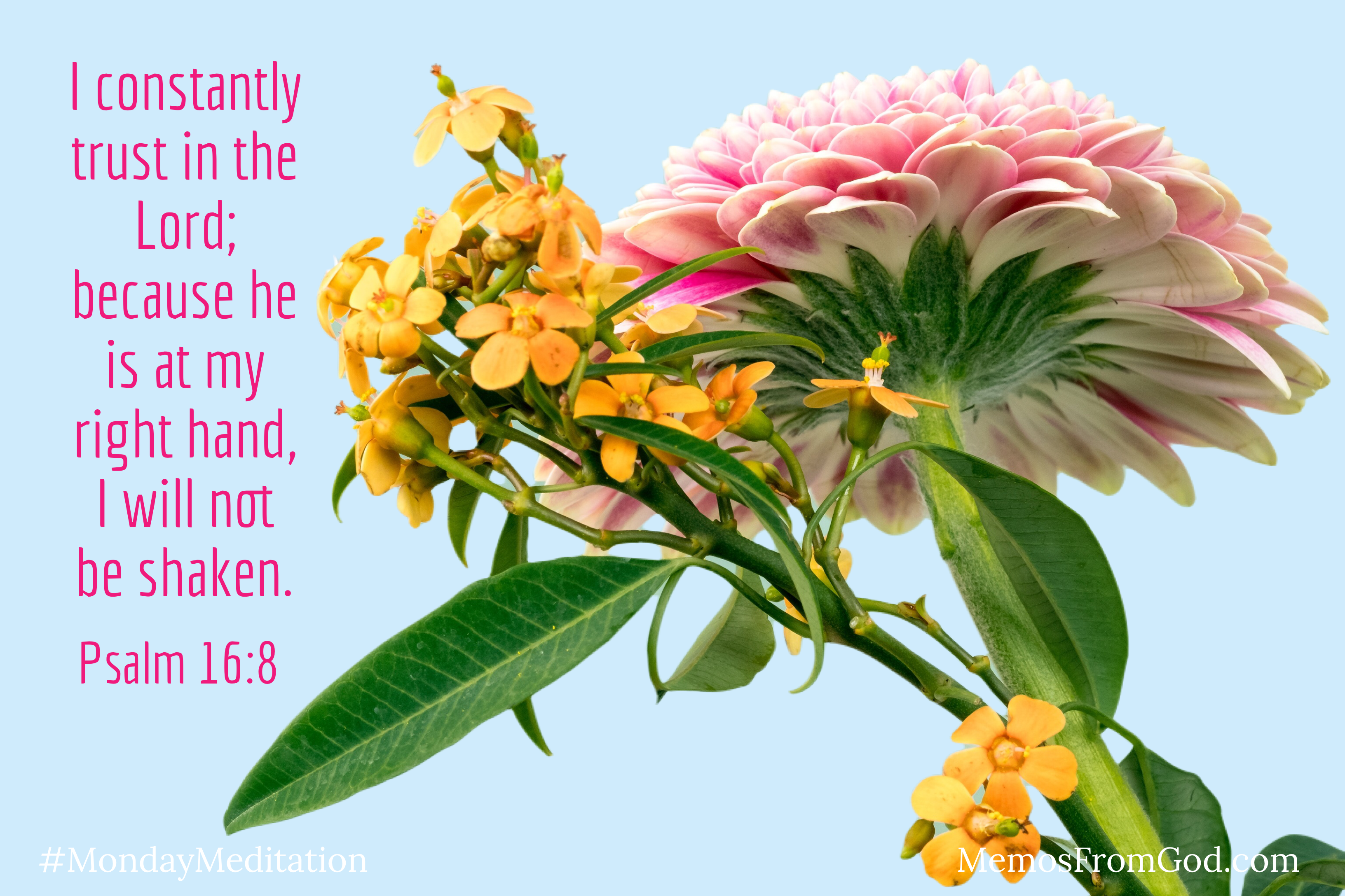 One large pink flower with a stalk of small yellow flowers on a blue background. Caption: I constantly trust in the Lord; because he is at my right hand, I will not be shaken. Psalm 16:8