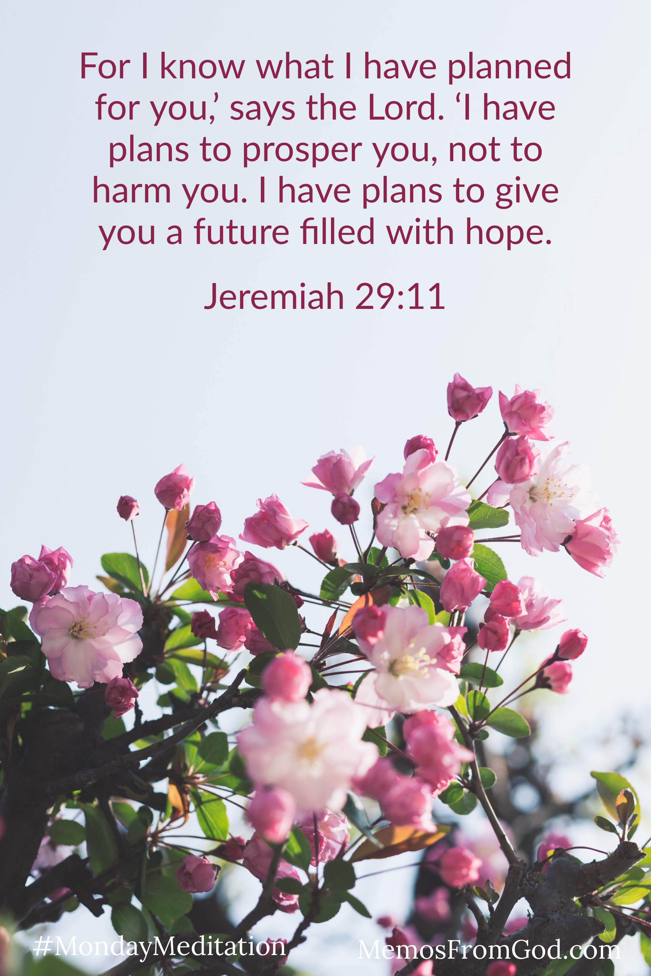 Branches filled with pink blossoms against a grey sky. Caption: For I know what I have planned for you,' says the Lord. 'I have plans to prosper you, not to harm you. I have plans to give you a future filled with hope. Jeremiah 29:11
